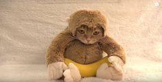 猫なの? 猿なの? バナナ食べてるこの子はだーれ?
