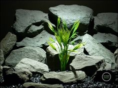 plastic aquarium plants: mermaid grass from ron beck designs. sku pap175 by ronbeckdesigns on Etsy