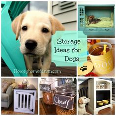 A New Dog and Storage Solutions for all of their stuff!