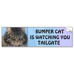Bumper Cat is watching TAILGATE #6  Angel has an especially disapproving look on this one.