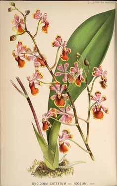 BioDivLibrary - has links to EVERY library's Flickr page of natural science drawings - darwin style - all seem to be public domain