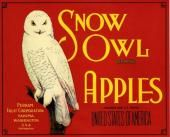 Yakima, Washington Snow Owl Apple Crate Label Art Print