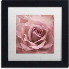 Trademark Fine Art 'Misty Rose Pink Rose' Canvas Art by Cora Niele, White Matte, Black Frame, Size: 16 x 16, Multicolor