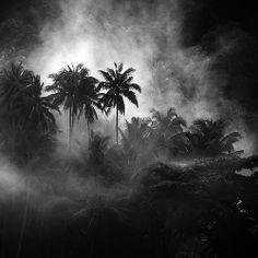 Fantastic photos Indonesia by Hengki Koentjoro Black And White Tree, Black White Photos, Black And White Photography, White Trees, Semarang, Forest Tattoos, Tropical Forest, Photography For Beginners, Photo Black