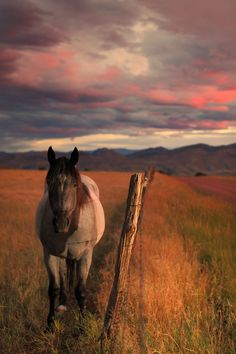 A very friendly and patient equine, hanging out on the Robert's Ranch in…