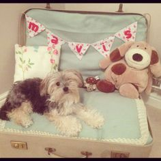 dog suitcase bed with decorations on the top