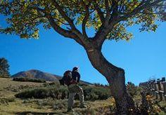 Le Mont Canigou, classé Grand site de France, est l'emblème des Pyrénées-Orientales et du Pays Catalan.
