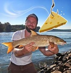 Barbenangeln mit Käse | Fishing for barbel with cheese