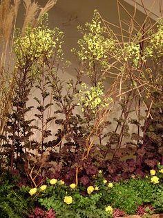 Edible flowering kale