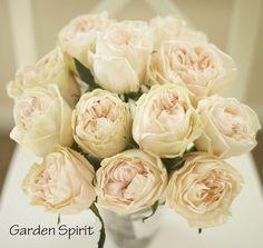 Garden Spirit, blush peach garden rose