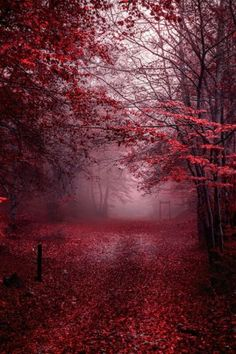 Pics are not mine , all credits and respect to the artists - Wald Burgundy Aesthetic, Aesthetic Colors, Aesthetic Pictures, Aesthetic Dark, Night Aesthetic, Landscape Photography, Nature Photography, Photography Ideas, Kunstjournal Inspiration