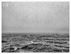 © Richard Cawood - 3rd Place The best of IPPAWARDS 2012 #fotopolis #iphonetography #iphonetographia #photography #love #inspiration #pictureoftheday #picoftheday #photooftheday #follow #iphoneonly