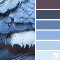 today's inspiration image for { feathered hues } is by @rotblaugelb ... thank you, Julia, for another incredible #SeedsColor image share!