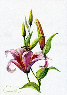 Flowers, Lilia, pink, Watercolor Original Painting from the Artist #Realism