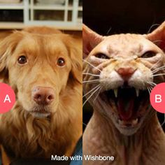 Have a dog that whines or a cat that scares you? Click here to vote @ http://getwishboneapp.com/share/4802440