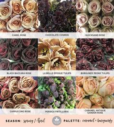 Mayesh Cooler Picks - Spring - Caramel + Burgundy // Products - top: Camel rose, chocolate cosmos, Quicksand rose | middle: Black Baccara rose, La Belle Époque tulips, burgundy peony tulips | bottom: Cappuccino rose, Persica fritillaria, Caramel Antique garden rose