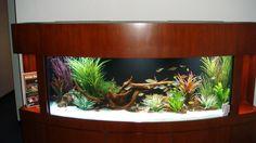 Elegant Fish Tank With Wood Case Furniture And Natural Grass Decoration  Ideas With Natural Aquarium Plant Modern Aquarium Tank Design With  Beautiful ...
