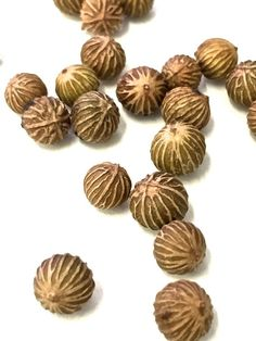 Image result for guanacaste seed pods