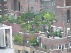 Photos showing ideas for urban gardening, from rooftop gardens to small backyards and container vegetables.