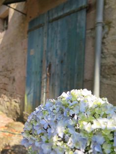Gorgeous Blues - Old aged Barn Door & Hydrangeas working in perfect harmony