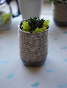DIY upcycled rope planter with succulent...made from a plastic bottle...