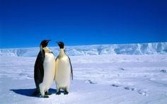 Preview wallpaper penguins, couple, snow, ice, antarctica, winter