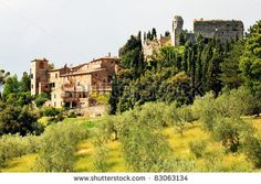 stock photo : Olive Grove in Tuscany, Italy, Europe