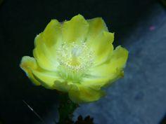 Crasulas y más 17-08-08 - Adriana Celli - Álbumes web de Picasa Cactus, Album, Pest Control, Compost, Picasa, Flowers, Card Book