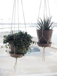 DIY hængeplanter