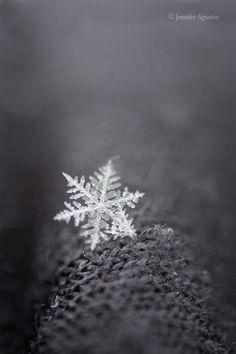 Real snowflake ..... Someone has to be up there making these surely !!! Sooooo magical X