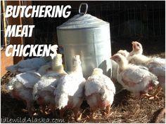 Butchering Meat Chickens - IdlewildAlaska