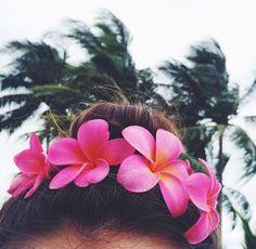 : Pℓυмєɾíɑѕ in your hair x (pc: zoiodlulua via ki-ele.tumblr.com) #kiele #kielehawaii IG: @ki_ele