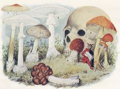 By Nancy Mattoon A Bouquet of Poisonous Mushrooms. Number 3 is Amanita phalloides . From: McIlvaine, Charles. One Thousand American Fungi. Amanita Phalloides, Poisonous Mushrooms, Mushroom Tattoos, Slime Mould, Mushroom Art, Mountain Tattoo, Angel Of Death, Skull And Bones, Memento Mori