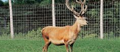 Deer & Wildlife Fence - Cross Lock® Knot
