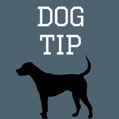 Dogadvice: It's never too late to change behaviour, some will just take longer than others.🐕