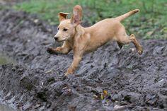 Bra artikel – om vanliga missuppfattningar i hundvärlden