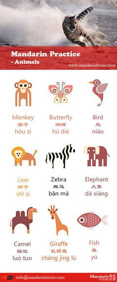 Check out this Mandarin Animal worlds For more info please contact: bodi.li@mandarinh... The best Mandarin School in China