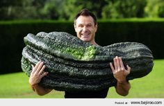 Giant Vegetables In The World You Never Seen Before (16 Photos)
