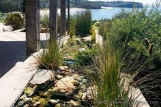 Australian native plants used in this fabulous landscaping around a beach house