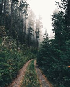 Driving down foggy forest roads…one of my favorite things to do 🌲 Foggy Forest, Forest Road, Road Photography, Mountain Photography, Foggy Mountains, Water House, Back Road, Farm Life, Pacific Northwest