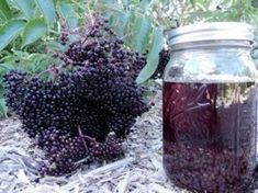 Natural Remedies For Cough It's Elderberry Time ~ Making Cough Syrup and Tincture Elderberry Cough Syrup, Elderberry Plant, Elderberry Juice, Elderberry Recipes, Elderberry Syrup Recipe Fresh, Herbal Remedies, Health Remedies, Natural Remedies, Flu Remedies