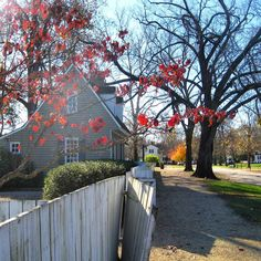An autumn view down Palace Green towards Duke of Gloucester Street.  #colonialwilliamsburg #virginia #thedogstreetpatriot #loveva #palacegreen #autumn #fallcolors #whitepicketfence #18thcentury #colonialamerica by the_dog_street_patriot