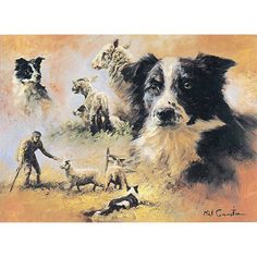 Dogs - Border Collies - 6 pack