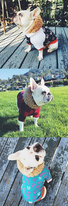 14 insanely cute Dog Hoodies every Frenchie, French Bulldog needs to own this winter.