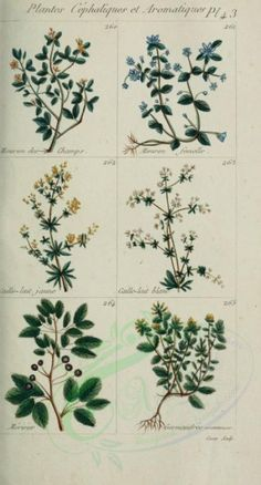 mouron, caille-lait, meriseier, germandree - high resolution image from old book. Ornament Crafts, Botany, Bloom, Herbs, Clip Art, Scrapbook, Floral, Nature, Plants