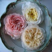 I only want to plant these kind of English roses in my yard
