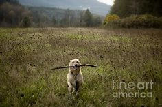 Fetching Photograph by Belinda Greb - Fetching Fine Art Prints and Posters for Sale fineartamerica.com