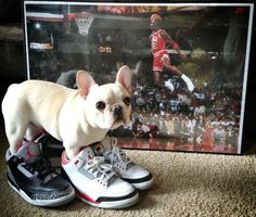 A french bulldog named after Charles Barkley