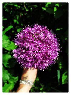 Dandelion, Drawings, Flowers, Plants, Photography, Photograph, Dandelions, Fotografie, Sketches