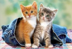 Sweety kittens